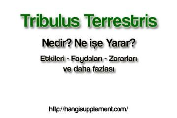 Tribulus işe gerçekten işe yarıyor mu?