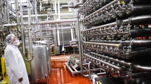 Bir peynir fabrikasında whey işlemi yapan cihazın görüntüsü Kaynak: NPR