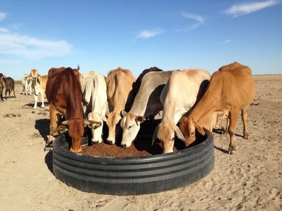 Çiftlik hayvanlarına da supplement veriliyor, ama insanların tüketimine uygun olan türlerden değil tabi ki...